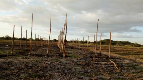 fase 1 van de bouw van een kas (greenhouse) in Misungwi. Het houten skelet.
